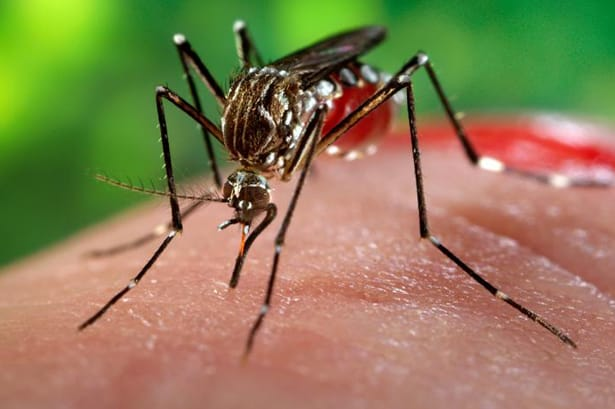 6 Ways To Protect Yourself Against Zika Virus